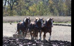 Fall Festival & Draft Horse Plow Days this weekend!